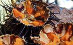 Piatti con Frutti di mare
